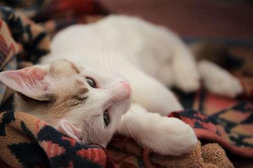 imágenes gratis fondos de gatitos divertidos