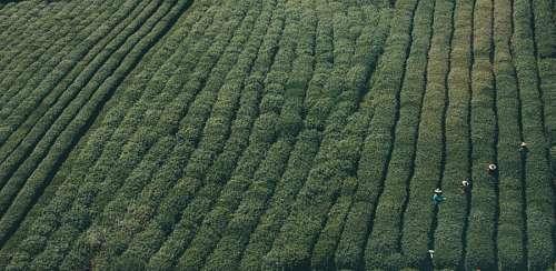 Gente cultivando el campo