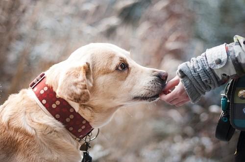 Mascota fiel oliendo la mano de su amo