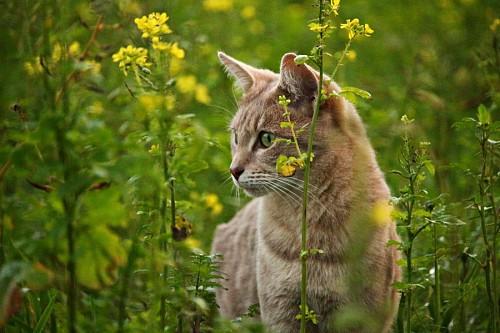 Curioso gatito entre flores