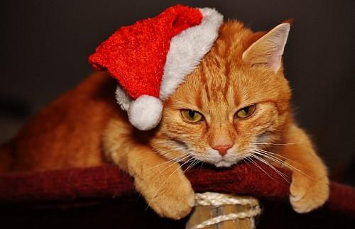 Gato con pelaje dorado y gorrito navideño
