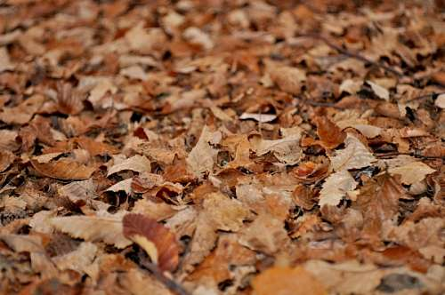 Imagenes Gratis otoño