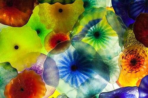 imágenes gratis medusa, medusas, color, colores, invertebrado, ani