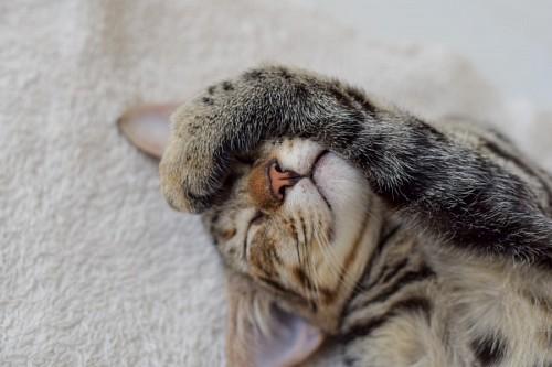 Dulce gatito descansando con su patita sobre su rostro
