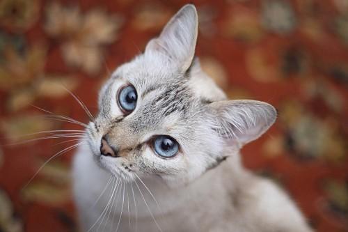 imágenes gratis Bella gatita con efecto bokeh
