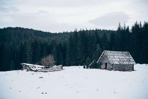 Cabaña nevada en el bosque