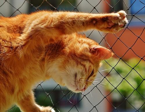 Travieso gatito trepando por el alambrado