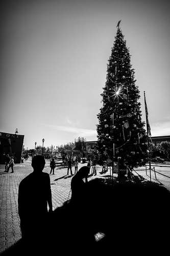 imágenes gratis Arbol de Navidad