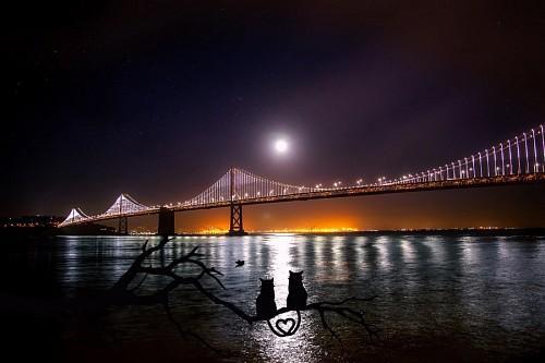 Pareja de gatos observando el puente de San Francisco
