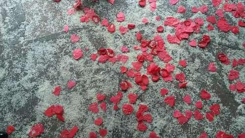imágenes gratis Petalos de Rosa y Arroz
