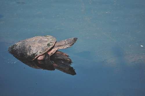 Tortuga espejo lago