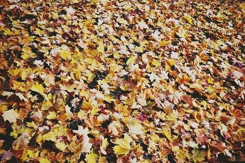 hoja, hojas, vista de frente, otoño, fondo, backgr