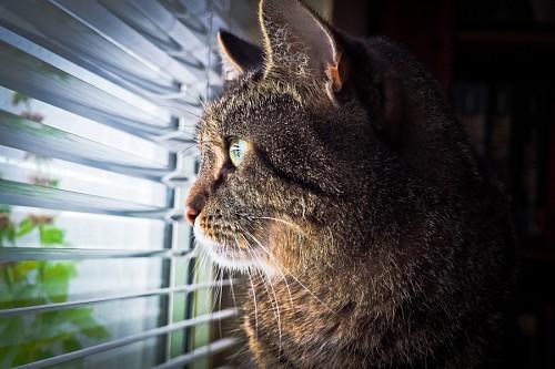 Mascota esperando a su amo en la ventana