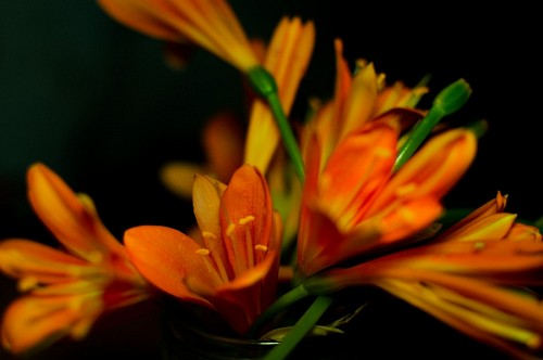 Flores artificiales sobre fondo negro