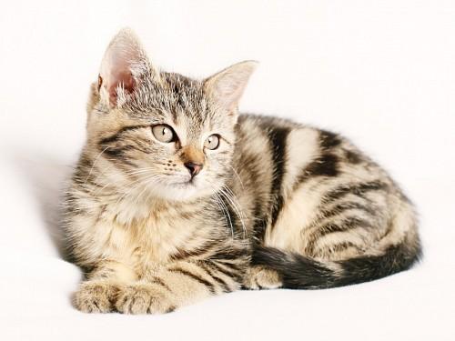Dulce gatito bebé en fondo blanco