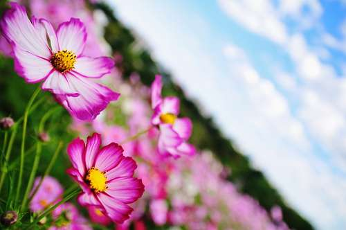 campo, flor, flores, naturaleza, primavera, fondo,