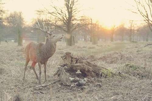 imágenes gratis ciervo