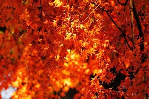 atardecer, fondo, background, otoño, hoja, hojas,