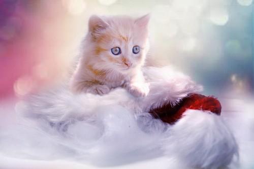 Tierno gatito para fondo de pantalla 4k