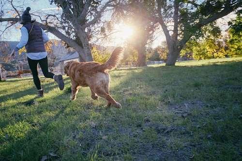 imágenes gratis Mujer corriendo con su mascota