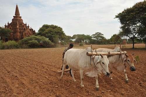 imágenes gratis Bagan, Birmania