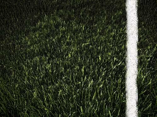 Textura Pasto Verde linea de Cal