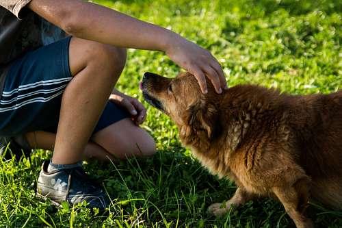 Acariciando un perro