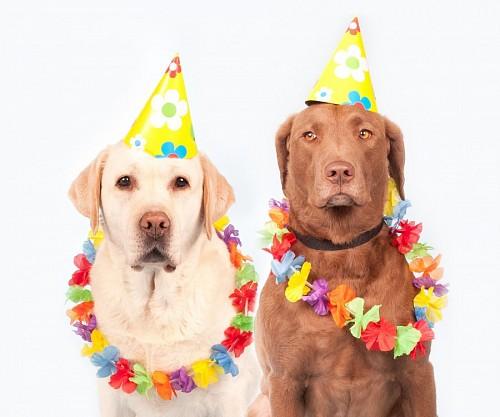 Divertidas mascotas preparadas para el festejo