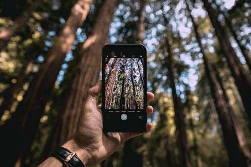 Fotografiando el bosque