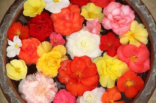 imágenes gratis Fondo de Flores
