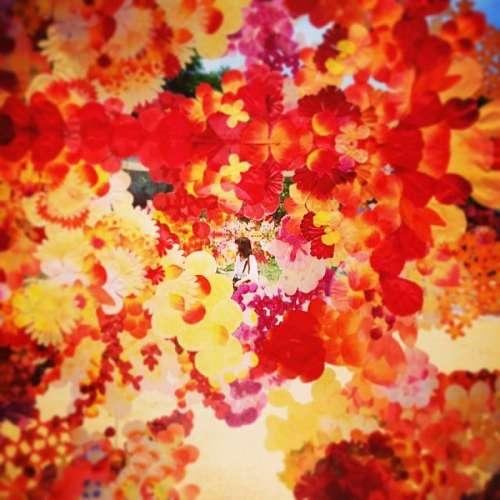 imágenes gratis atardecer, fondo, background, otoño, hoja, hojas,