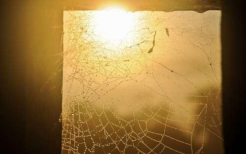 imágenes gratis tela de araña