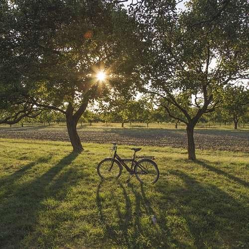 Bicicleta en el campo al atardecer