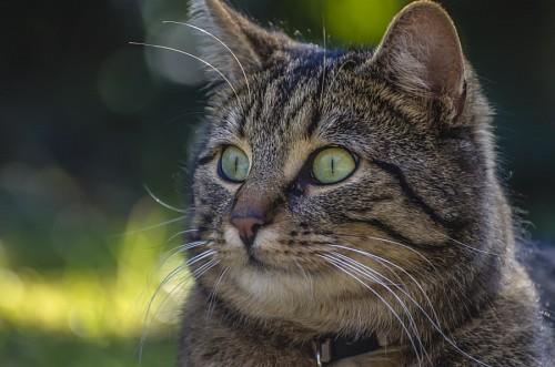 imágenes gratis Sonrisa y picardia felina