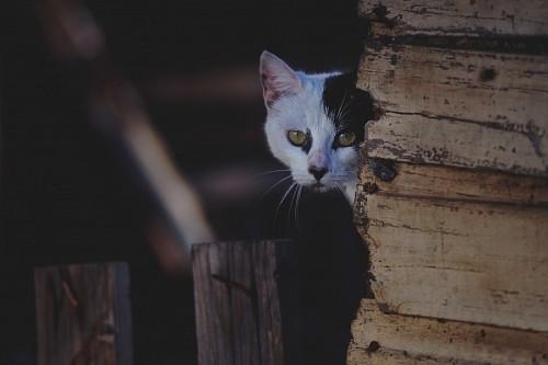 Gato escondido detrás de maderas