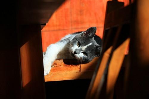 Tomando un descanso gatuno