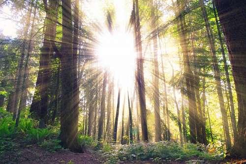 Bosque y rayos de sol