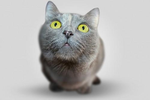 Primer plano de Gato sorprendido
