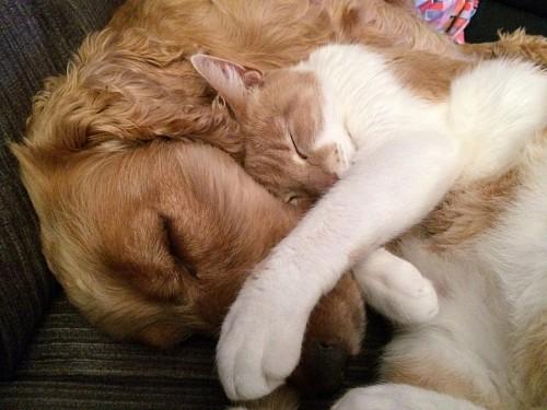 Imagenes de gatitos y perritos tiernos