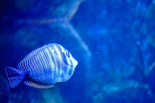 imágenes gratis Pez en el acuario