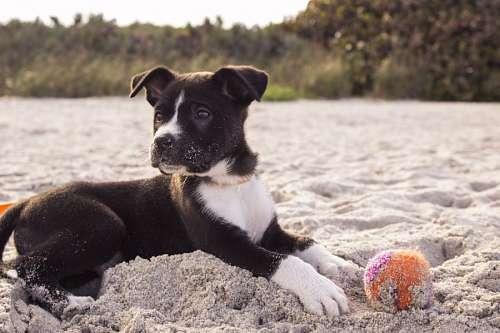 imágenes gratis Cachorro