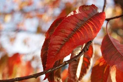 Otoño leaf