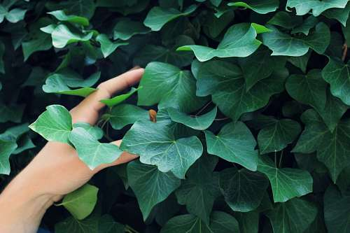 Mujer tocando plantas