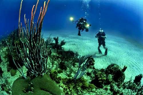 Dos personas tomando fotos en el fondo del mar