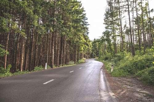 imágenes gratis Carretera en el bosque