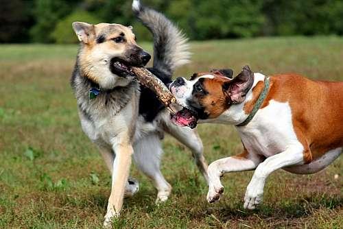 imágenes gratis Mascotas Jugando
