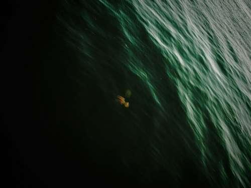 imágenes gratis Calamar