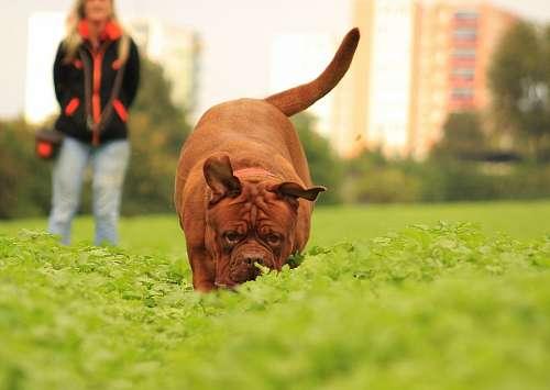imágenes gratis Paseo con mascota