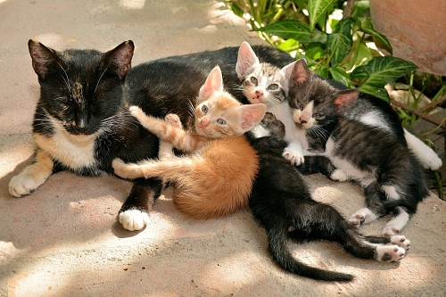 Madre gata con sus pequeñas crías