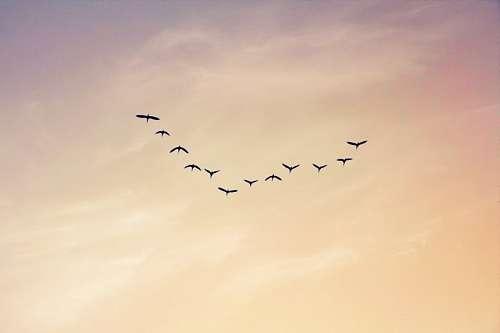 Argentina, La Pampa, atardecer, aves, birds, cielo